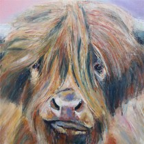 "Highlan cow by Mark Hutchby 30"" x 30"" oil painting"